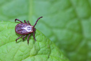 Protect Yourself and Others from Tick Bites